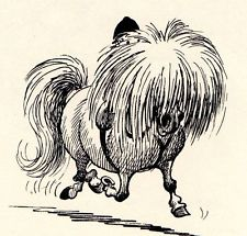 Shaggy Pony